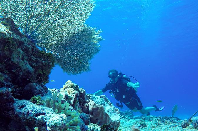 Aventura de mergulho em Cozumel com Passeio de balsa e transporte de Cancun e Riviera Maia