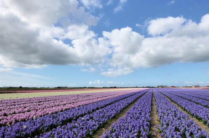 Private Tour: Tulip Fields of Holland Day Tour with Optional Bike Tour from Amsterdam