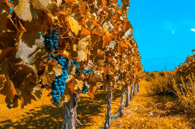 7-Day Best of Mendoza and Buenos Aires Tour: Culture, Wine and Food