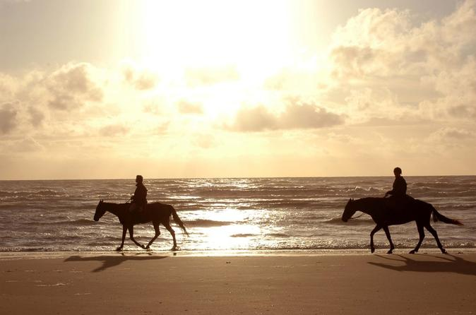 Horseback beach rides on amelia island in jacksonville 235900