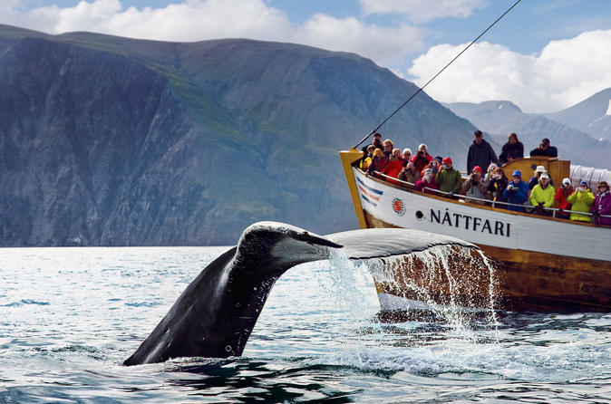Original Whale Watching Tour on board a Traditional Oak Ship from Husavik