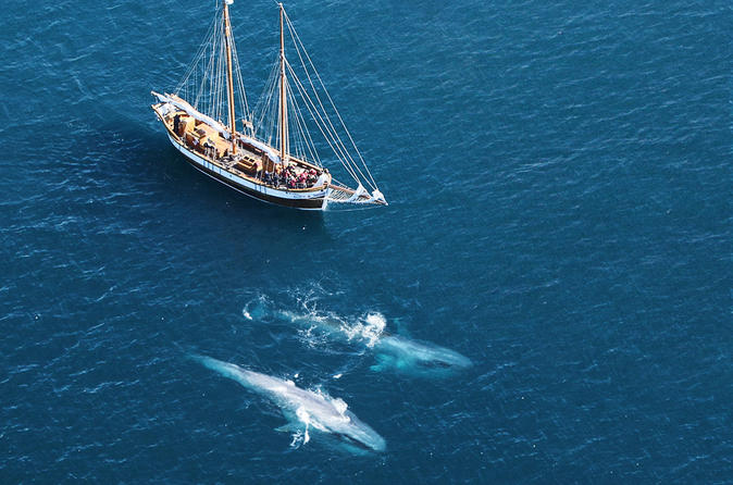 Whale and Puffin Watching on Board a Traditional Oak Sailing Ship from Husavik
