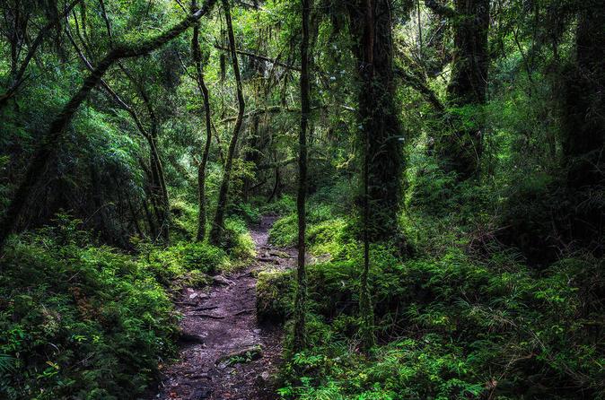 Parque Nacional Alerce Andino de Puerto Varas