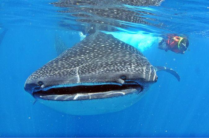 Excursão com encontro com tubarões com tudo incluso em Cancun