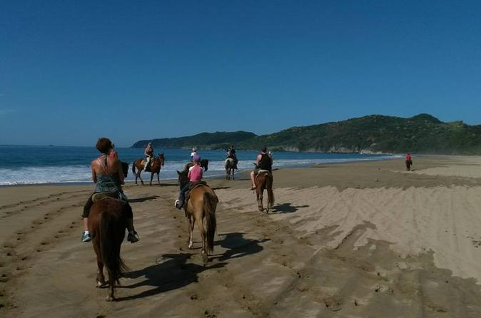 Horseback riding on the beach and through a coconut plantation in ixtapa 381108