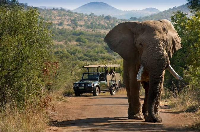 Pilanesberg safari in open vehicle from johannesburg or pretoria in johannesburg 315247