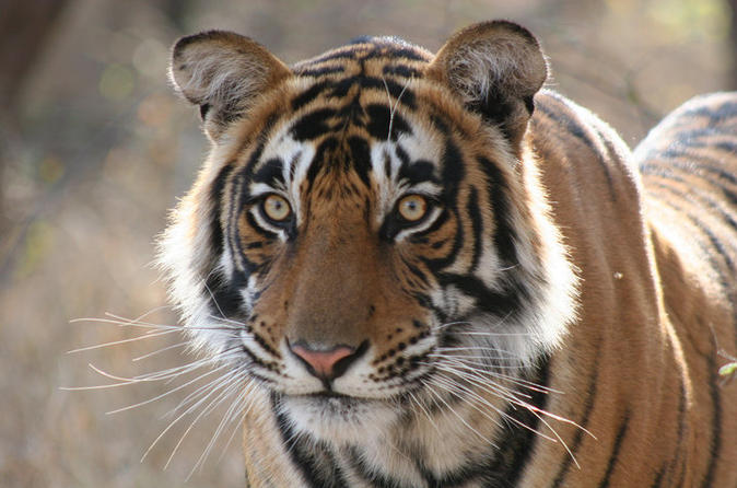 3-Day Ranthambhore Tiger Safari Tour From Jaipur To Agra With Delhi Drop-Off