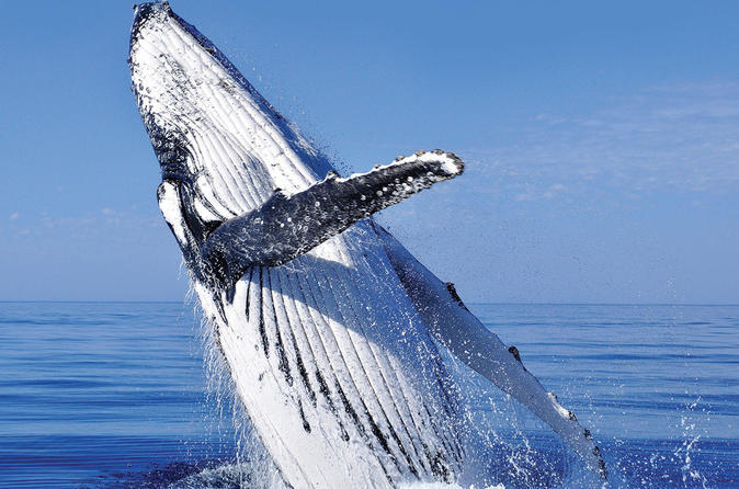 Whale Watching Combo in Cabo San Lucas: Sightseeing Cruise, Snorkeling and Shopping Mexico, North America