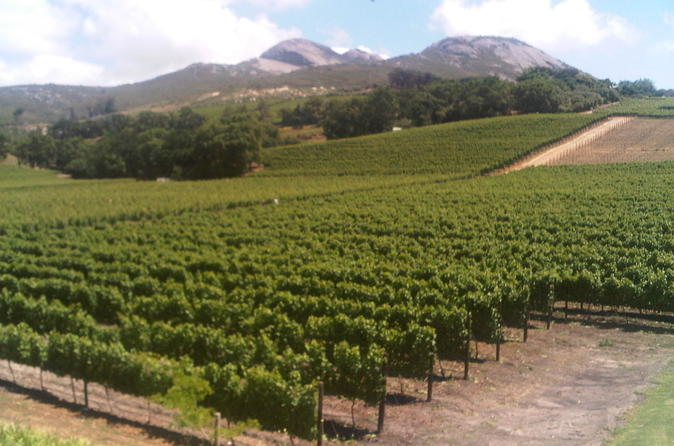 Private Cape Winelands Guided Day Tour from Stellenbosch, Franschhoek or Paarl