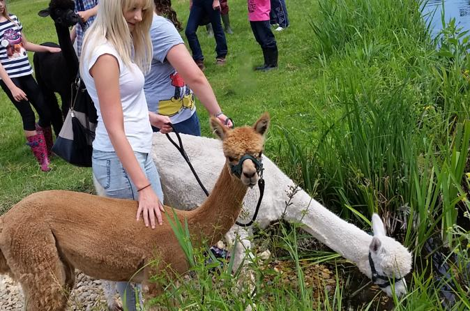 Alpaca Nature Walking Experience in Otterbourne