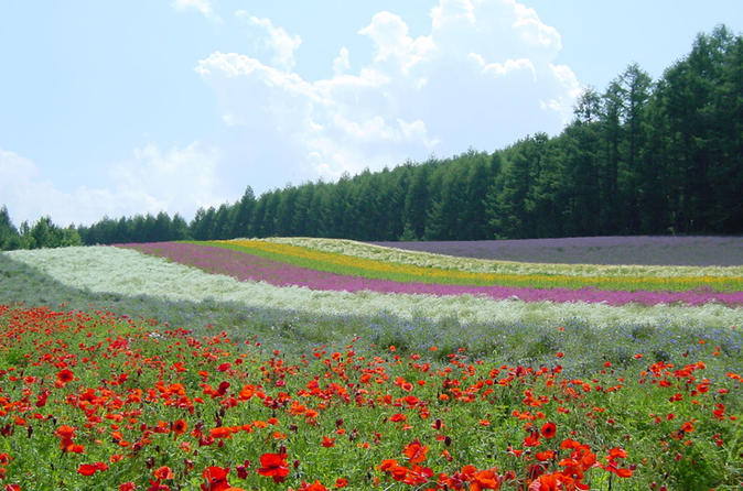Furano and biei one day tour by chartered vehicle from sapporo in furano 262369