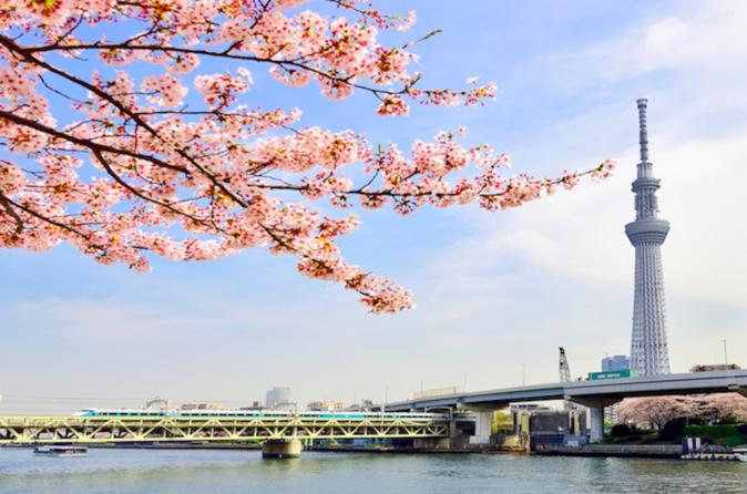 Tokyo: Cherry Blossom 'Sakura' Viewing Tour by Bus including Lunch