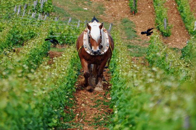 Burgundy Food, Wine & Nightlife