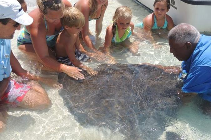 Stingray feeding tour at sandy cay in freeport 221998