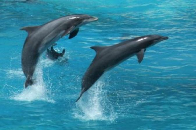 Dolphin Watch (2hours) :Muscat Tours
