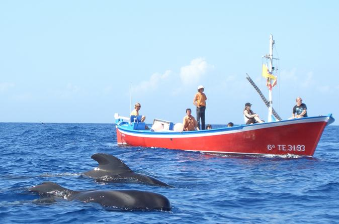 Whale and dolphin watching in canary islands in valle gran rey 264989