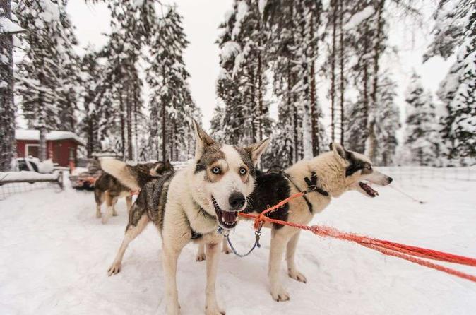 Husky Safari from Rovaniemi Including a Husky Sled Ride