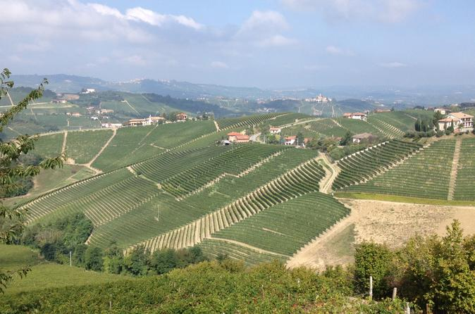 Barbaresco guided hike with brunch and wines in alba 231855