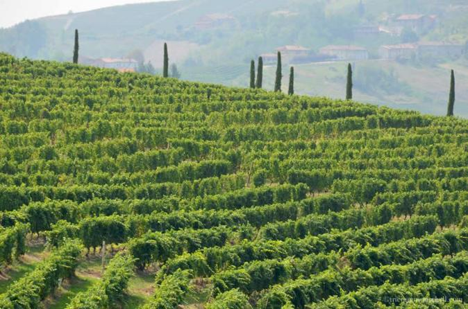 Monferrato wine tour without transportation in nizza monferrato 257745