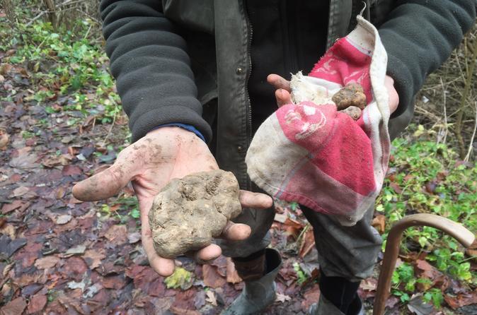 Truffle Hunting And Food Tasting - Alba