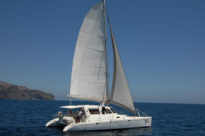 Dolphin and Whale Watching on a Luxurious Catamaran