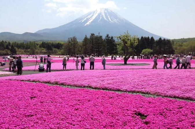 Mt Fuji & ShibaSakura Festival with Hotel Pick Up