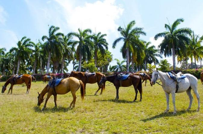 Braco Stables Hiking and Biking Tour Tour from Falmouth