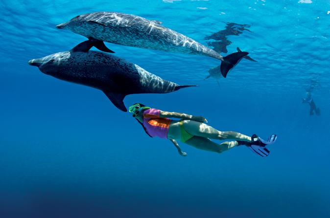 Half-Day Swimming with Dolphins
