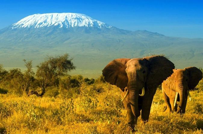2-Day Amboseli Safari from Nairobi