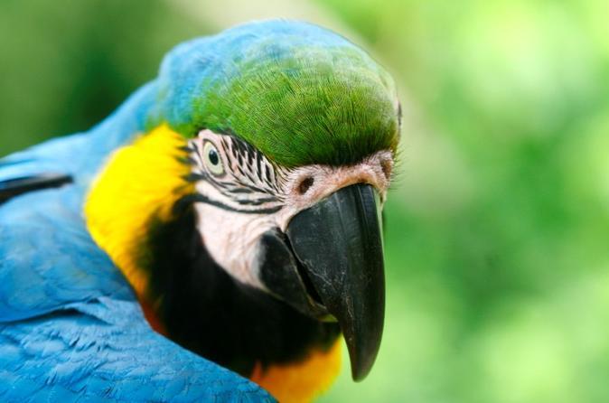 4-Day Jungle of Peru Tambopata Nature Reserve