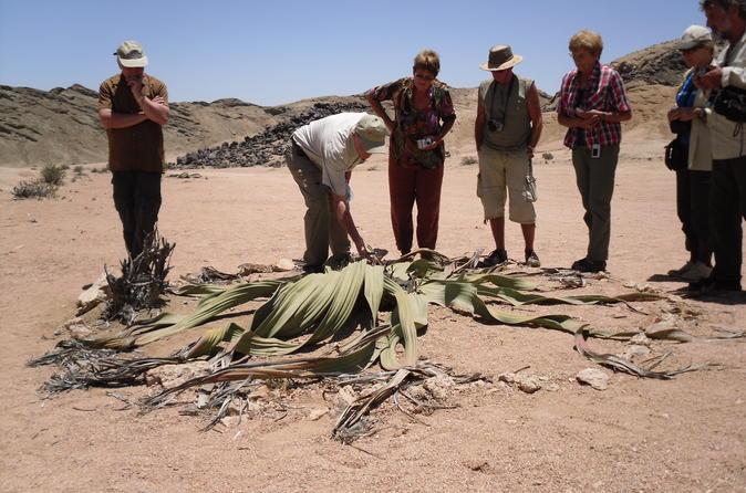 Namib desert tour from swakopmund in swakopmund 266713
