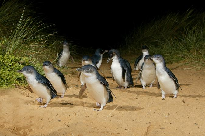 Private Tour to Phillip Island with Ranger Guided Experience