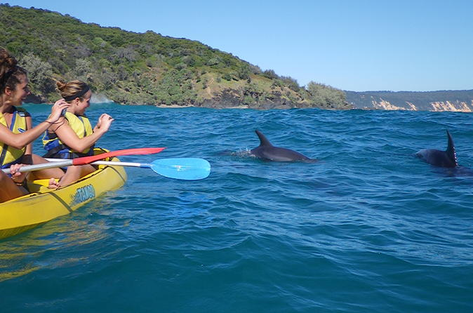 Kayak with dolphin from rainbow beach in rainbow beach 228011