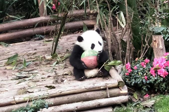 Beijing Panda House and Summer Palace Half Day Private Tour