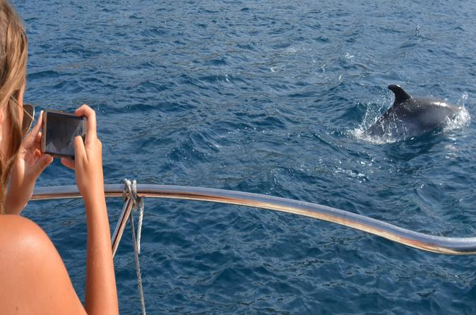 Dolphin Watch Tour in Sesimbra