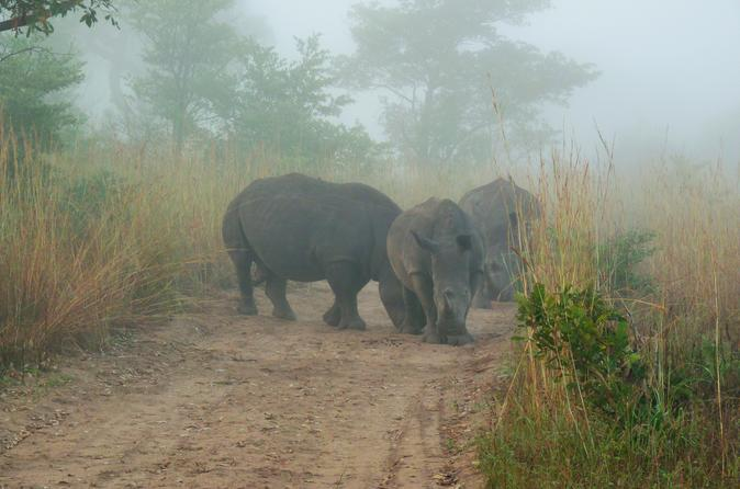 Kruger National Park Morning Game Drive from Hazyview