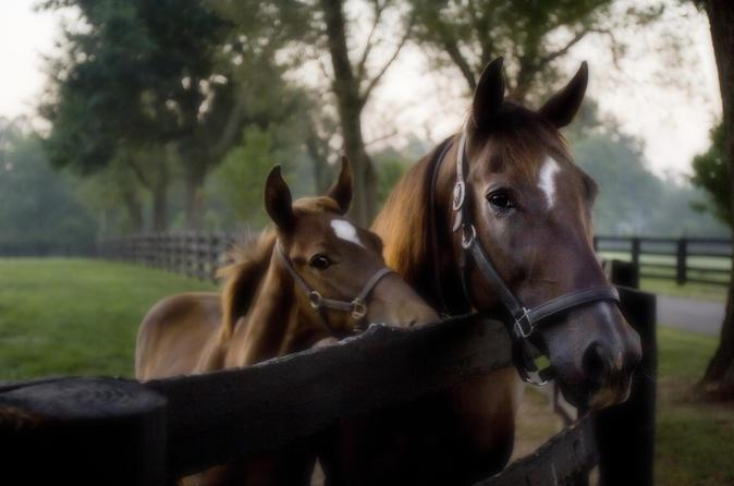 Kentucky thoroughbred heritage horse farm tour in lexington 222734