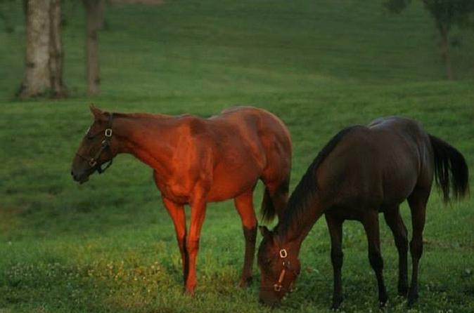 Thoroughbred Horse Farm Tour in Kentucky