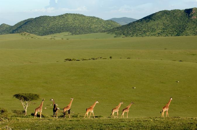 3 day maasai mara safari guided tour from mombasa in mombasa 283860