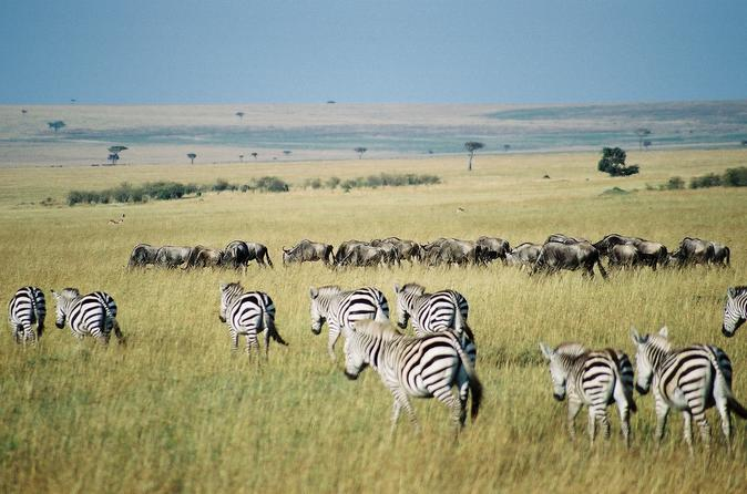 3 DAYS PRIVATE SAFARI TO MAASAI MARA NATIONAL PARK AND KEEKOROK LODGE