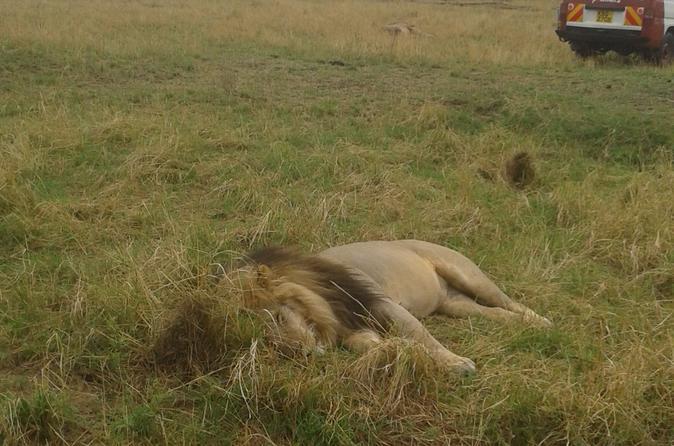 4-Days 3-Night Small-Group Safari to Maasai Mara and Lake Nakuru National Parks