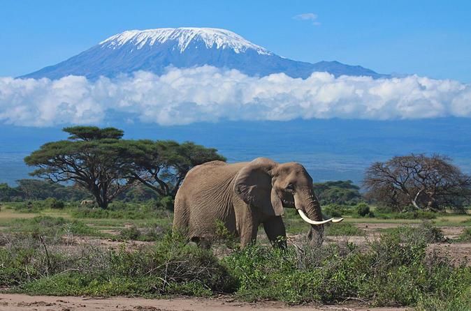 7 day safari to Maasai Mara, Nakuru, Naivasha and Amboseli