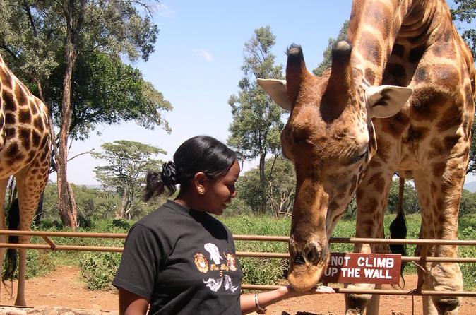 Day tour giraffe center elephant orphanage and nairobi national park in nairobi 280375