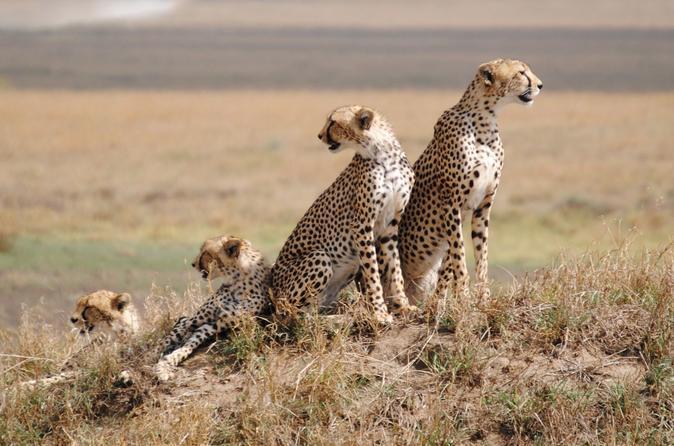 Overnight Tsavo East National Park Safari from Mombasa