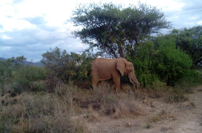 Private 3 day tsavo safari from mombasa in mombasa 279201