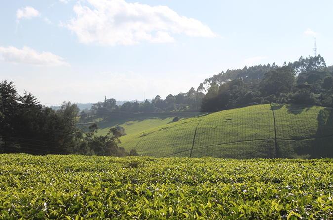 Private Day Trip to Kiambethu Tea Farm in Limuru from Nairobi