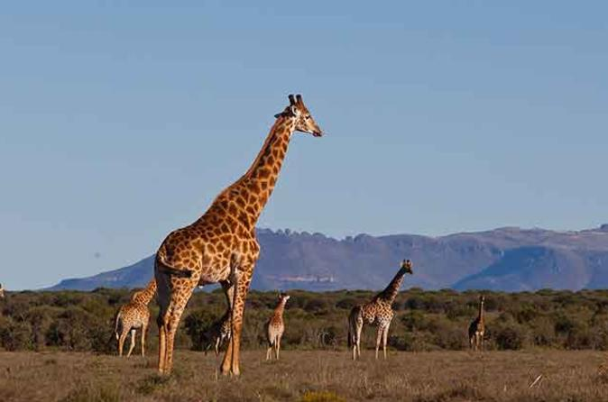 Private safari and cultural day tour from pretoria in pretoria 250128