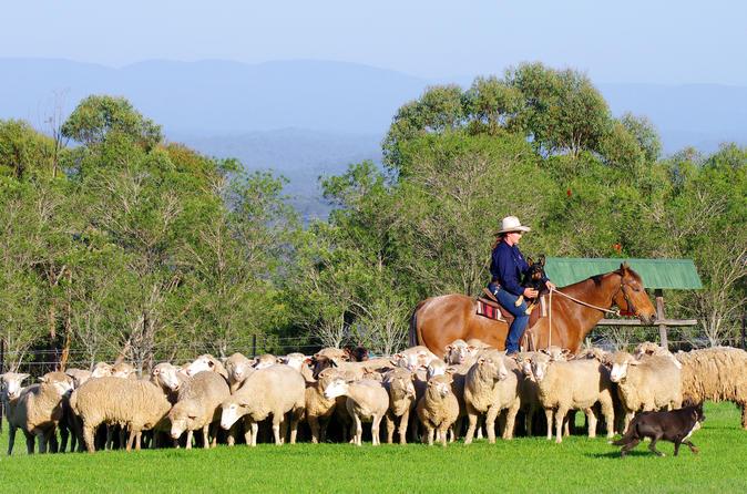 Tobruk Sheep Station: Farm and Australian Outback Experience