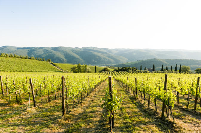 Tour and tasting at an organic winery in the heart of chianti in radda in chianti 213425