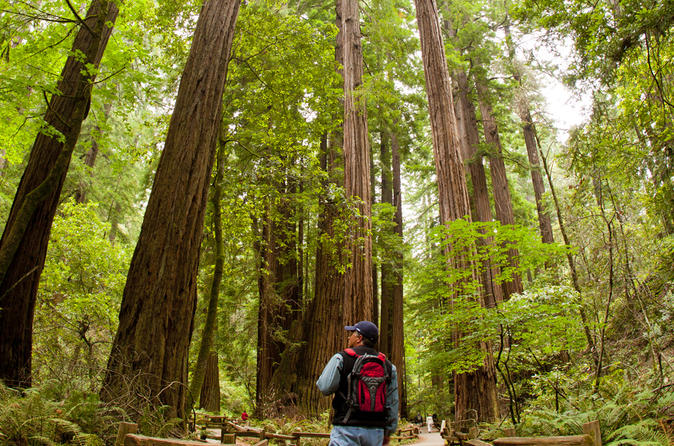Redwoods of Mill Valley and Marin Walking Tour from Sausalito
